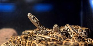 Couple Finds 'Momma' Snake And 17 Little Snakes Under Bed